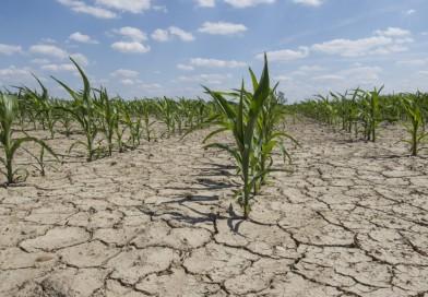 Agroindustria realizará una jornada gratuita de herramientas clave para afrontar la sequía