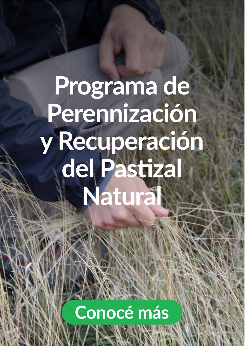 2-Perenizacion