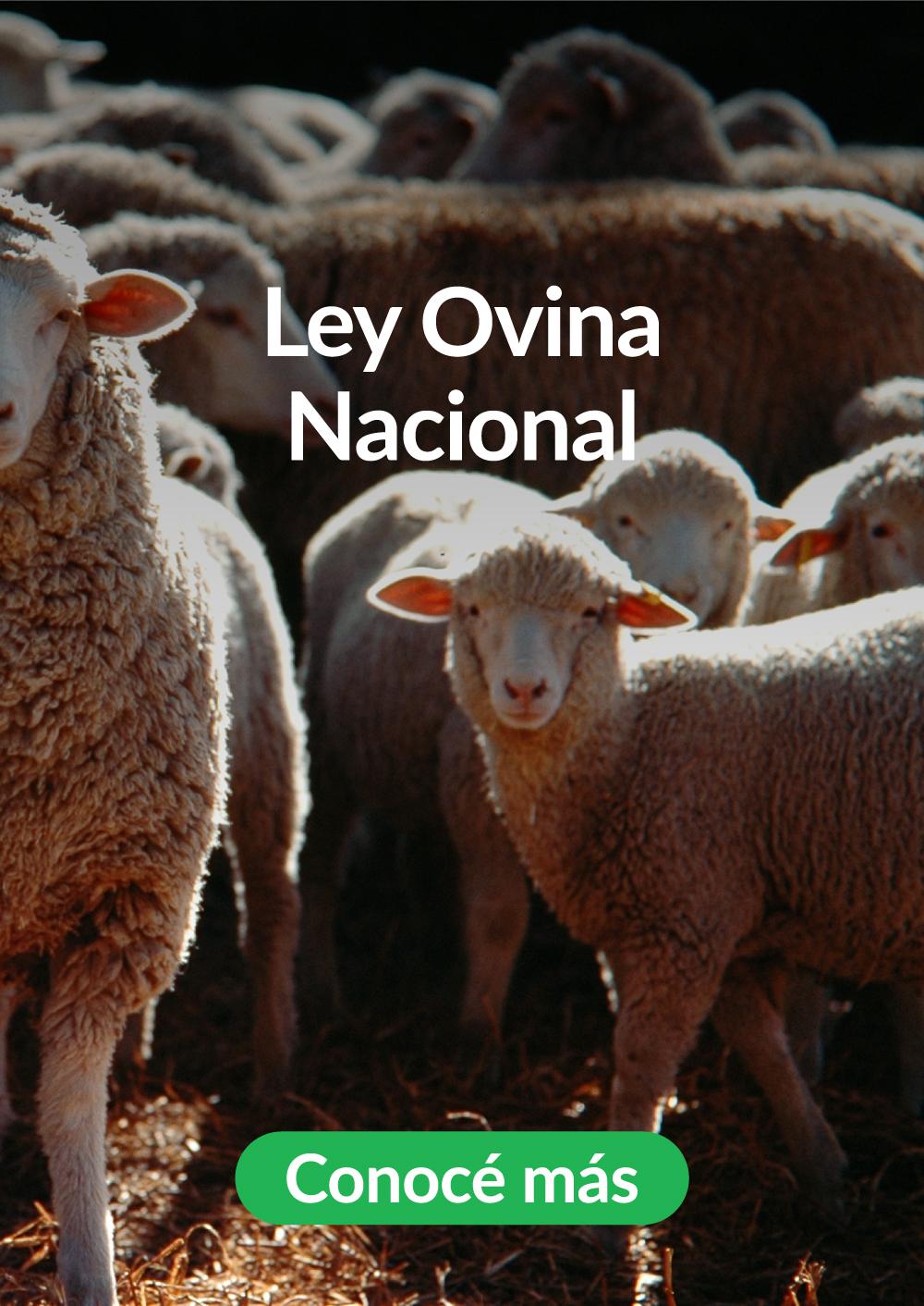 4-Ley-Ovina