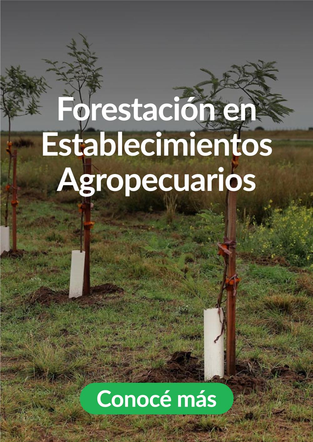 6-Forestacion